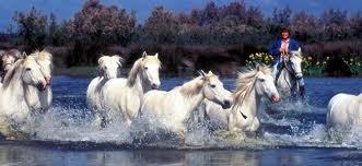 paarden groep