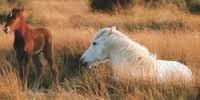 paarden veulen